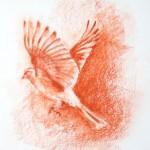 Sparrow915