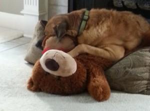 dog and a stuffed bear